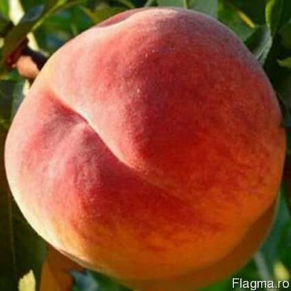 Продам персик оптом