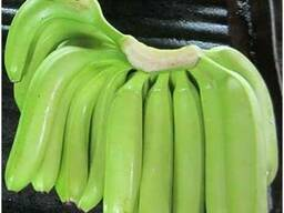 Bananes Covendich douce de table Grade A - photo 2