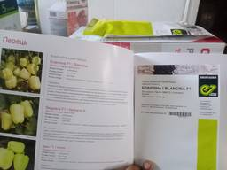 Blancina 500seeds/Enza Zaden