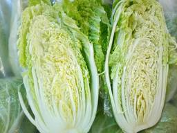 Cabbage Pekinese wholesale