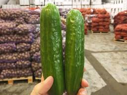 Овощи и фрукты оптом - фото 4
