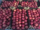 Polish apples, La-Sad - фото 1