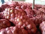 Продаем лук из Узбекистана - фото 5
