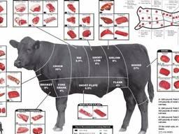 Продам говядину на экспорт