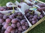 Виноград Македония - photo 1