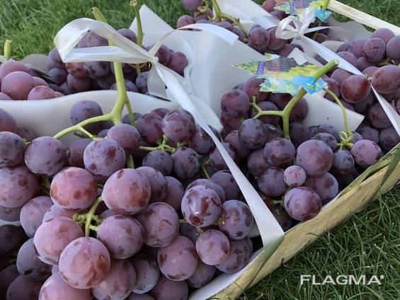 Виноград Македония