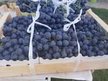Виноград Македония - photo 2